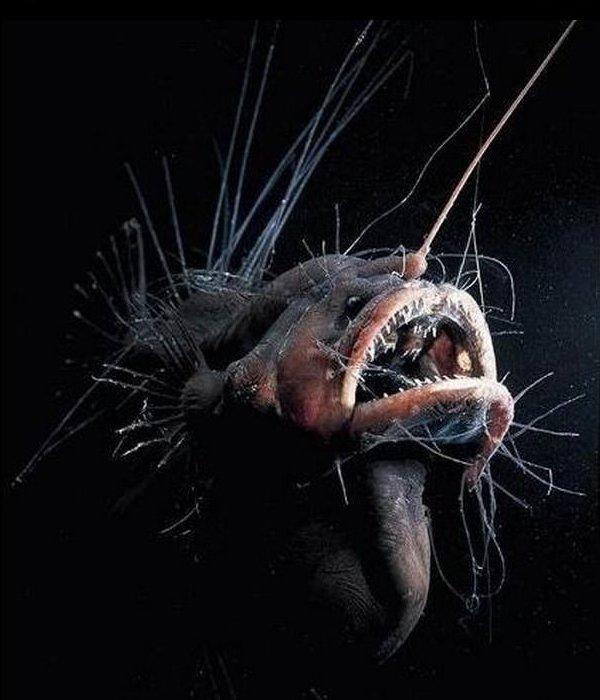 Mariana Trench Deep Sea Creature