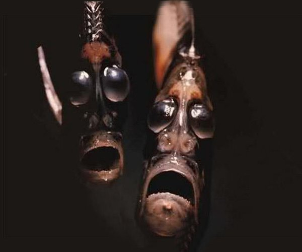 Mariana Trench Creatures
