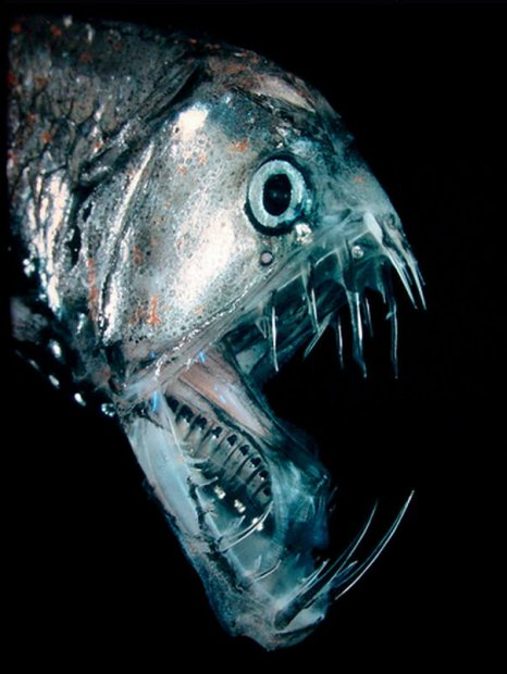 Deep Sea Creature