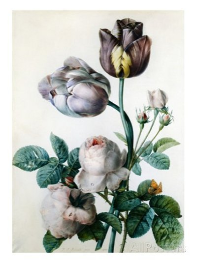 A Cabbage Rose, Two Tulips, a Small Tortoiseshell Butterfly and a Yellow Meadow Ant by Pierre-Joseph Redouté