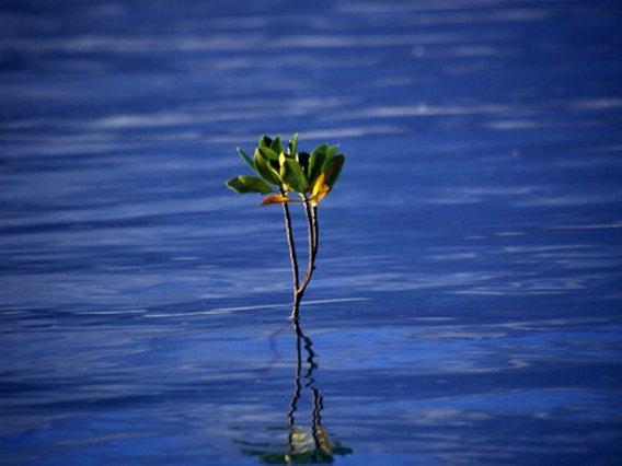 Emerging Mangrove, Seychelles