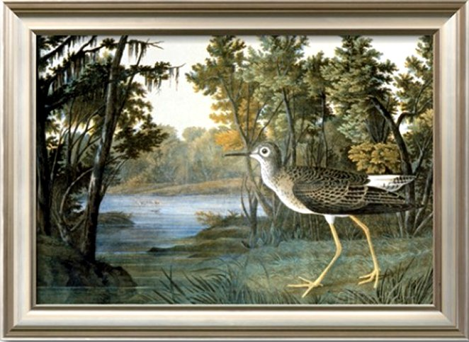 Lesser Yellowlegs by John James Audubon