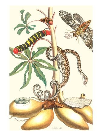 Moths and Tree Boa by Maria Sibylla Merian