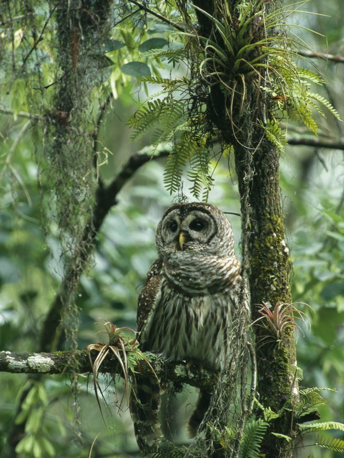Owl Perches on a Tree Branch