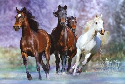 Running,  Horses, art print, photography by Bob Langrish