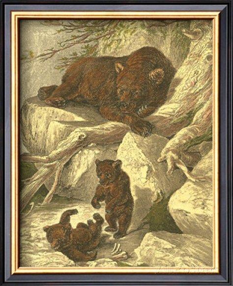 Small Brown Bear by Friedrich Specht