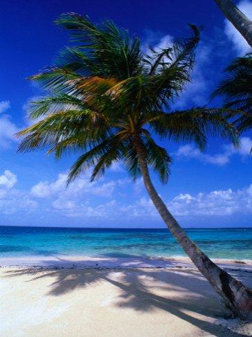 Palm Tree on key in the San Blas Islands, Panama